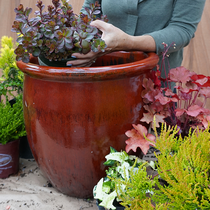 Professional Designers - Planting a outdoor container with winter plants.