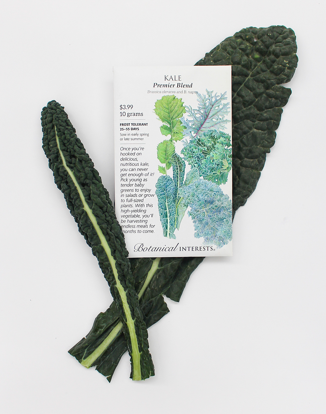 Botanical Interests® 'Premiere Blend' Kale Seeds
