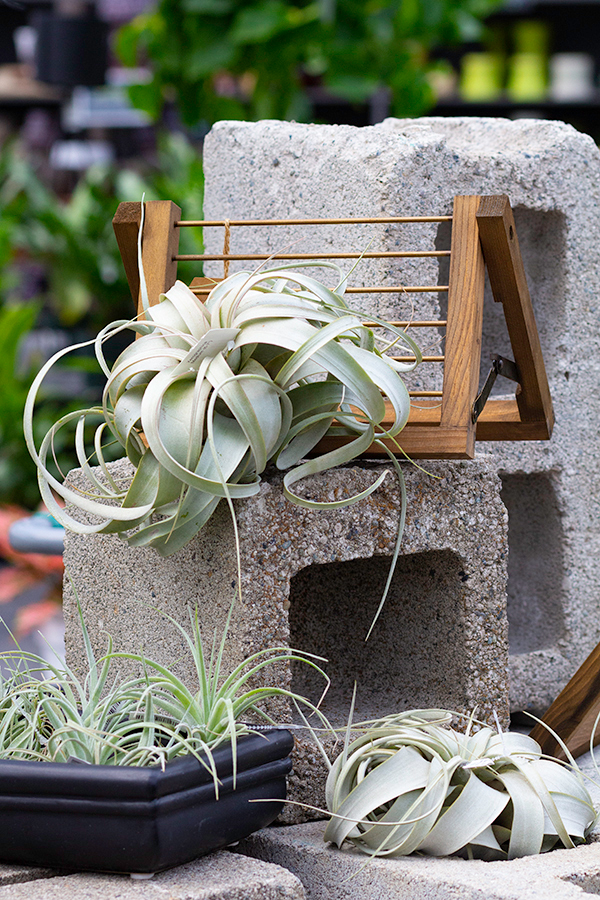 Molbak's Airplant Plant Dorm Desk