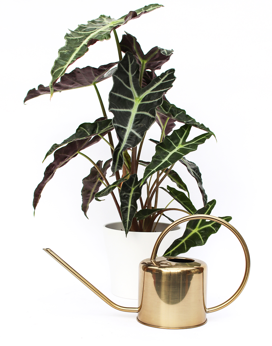 Indoor Stainless Watering Can