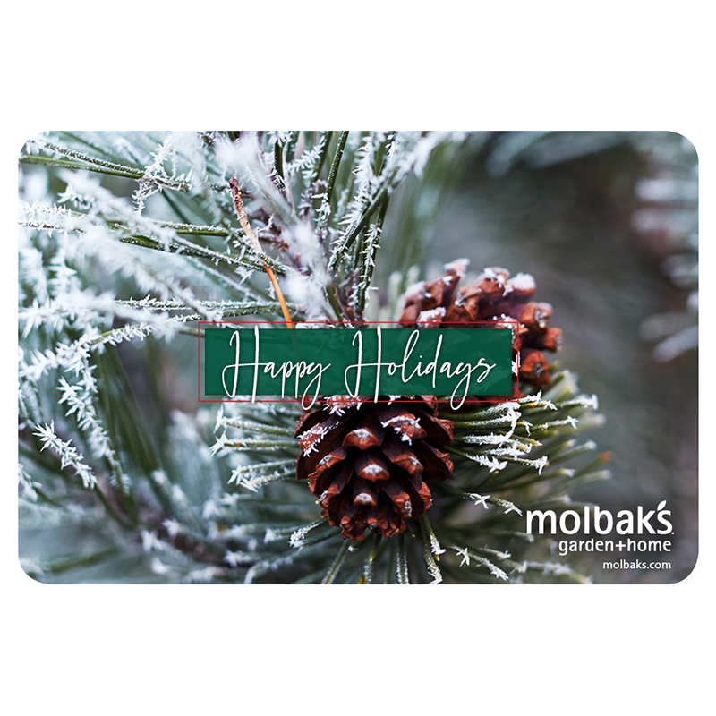 Holiday Gift Card Pinecone and Snow