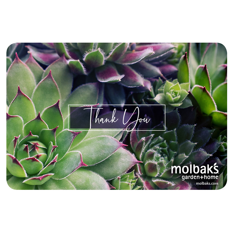 Gift Card Thank You - Succulents