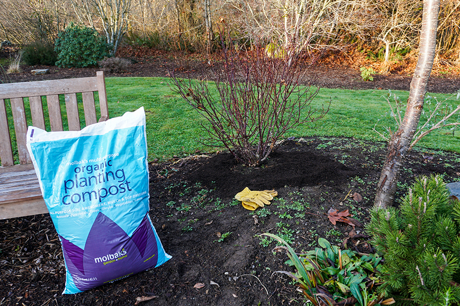 Mulching around trees and shrubs protects roots from severe cold.