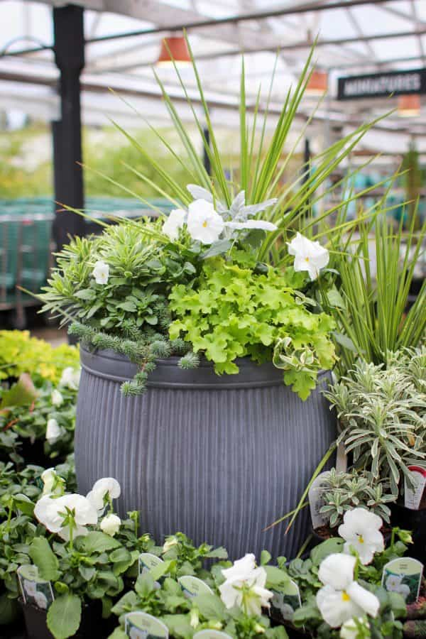 Barrel Container - Tips For Winter Containers - Molbak's Garden + Home