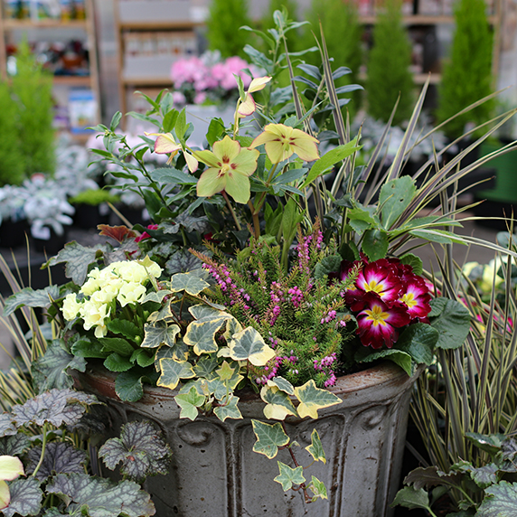 Container Garden planter with flowers, vines and greenery planted and arranged