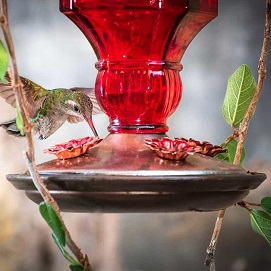 Garden Wildlife - Hummingbirds - Garden Supplies - Molbak's Garden + Hiome