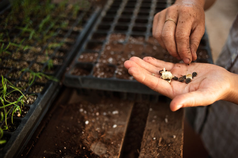 Planting Seeds in Trays