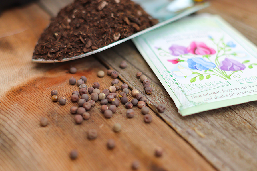 Sweet Pea Seeds and packet