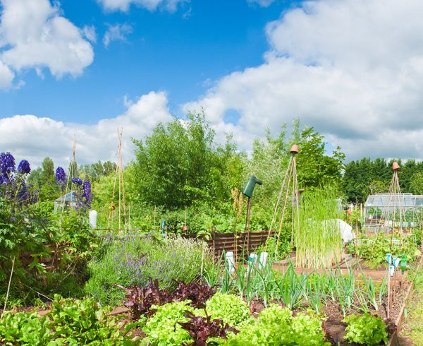 Pea Patch Garden in mid season with flowers and vegetables