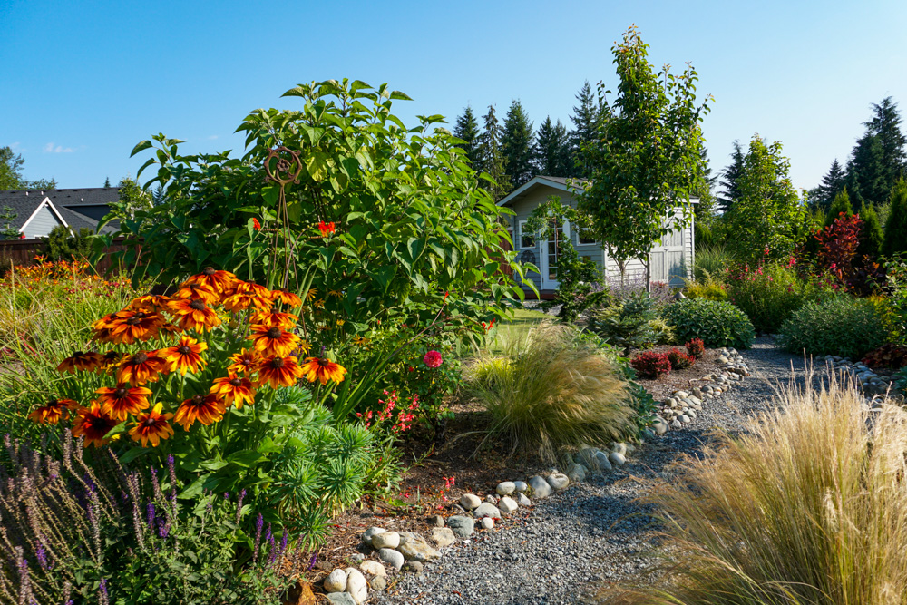 Pollinator's Paradise: Rock path to the she-shed.