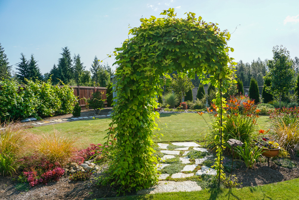 Home Garden Tour Molbak's Team Member Pollinator's Paridise Scene of yard with arch trellis covered with a vine.