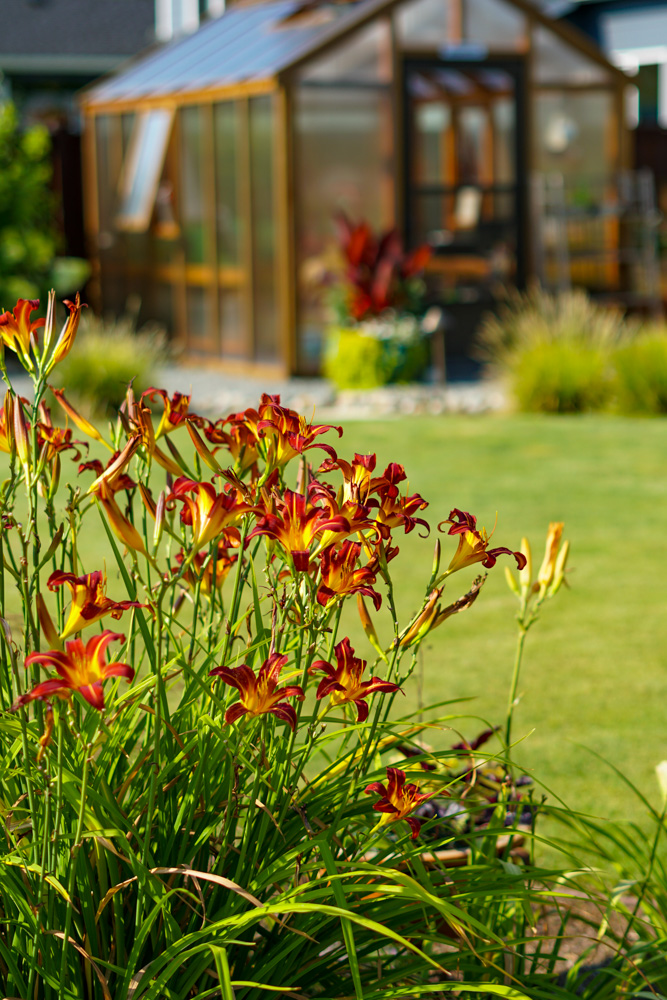 Pollinator's Paradise: Flower with greenhouse across the lawn.