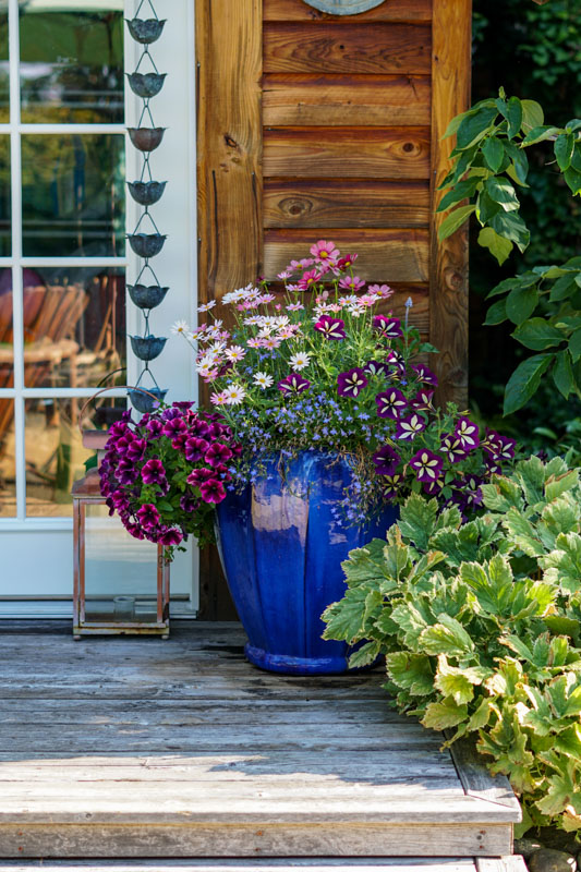 Garden Tour - Blue planter with pink flowers by the shed door.