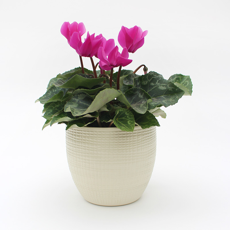 Cream Textured Planter