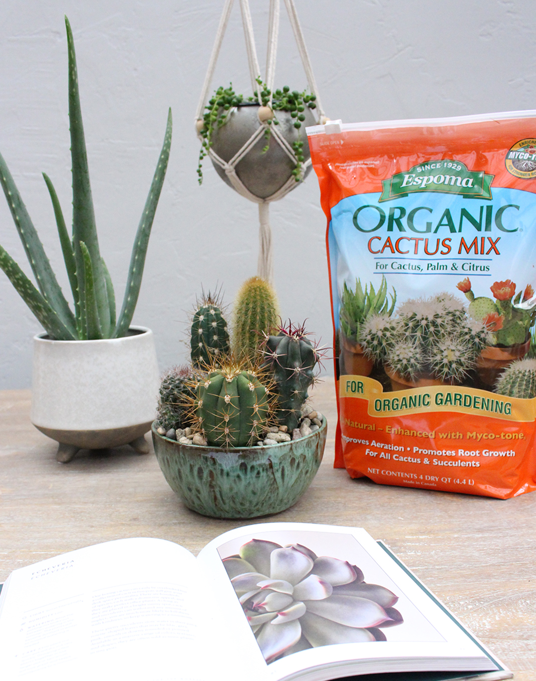 Espoma Organic Cactus Potting Mix 4 qt.