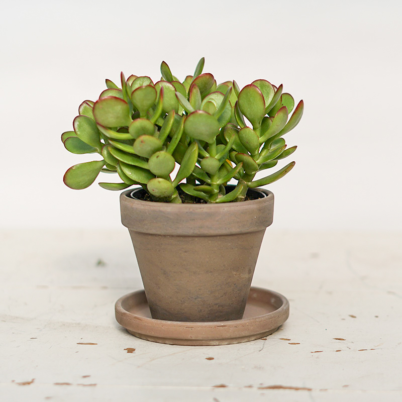 Terra Cotta Pots - Dark Marble, 4in.