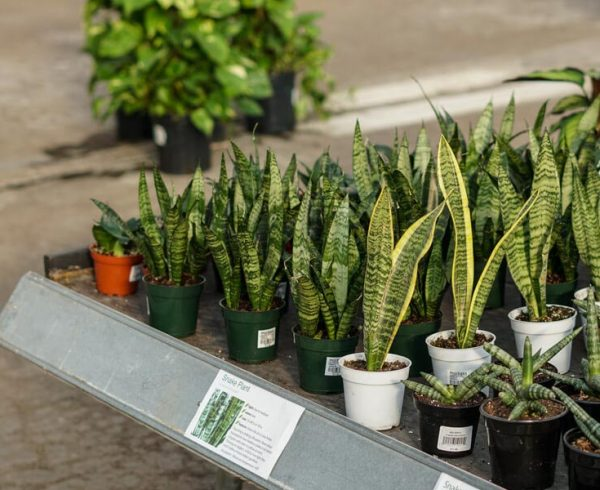 Molbak's table of low light plants
