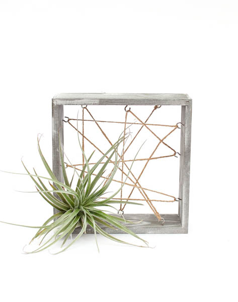Wood Air Plant Stand
