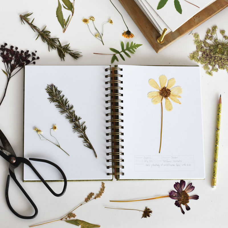 June & December ® Herbarium Journal