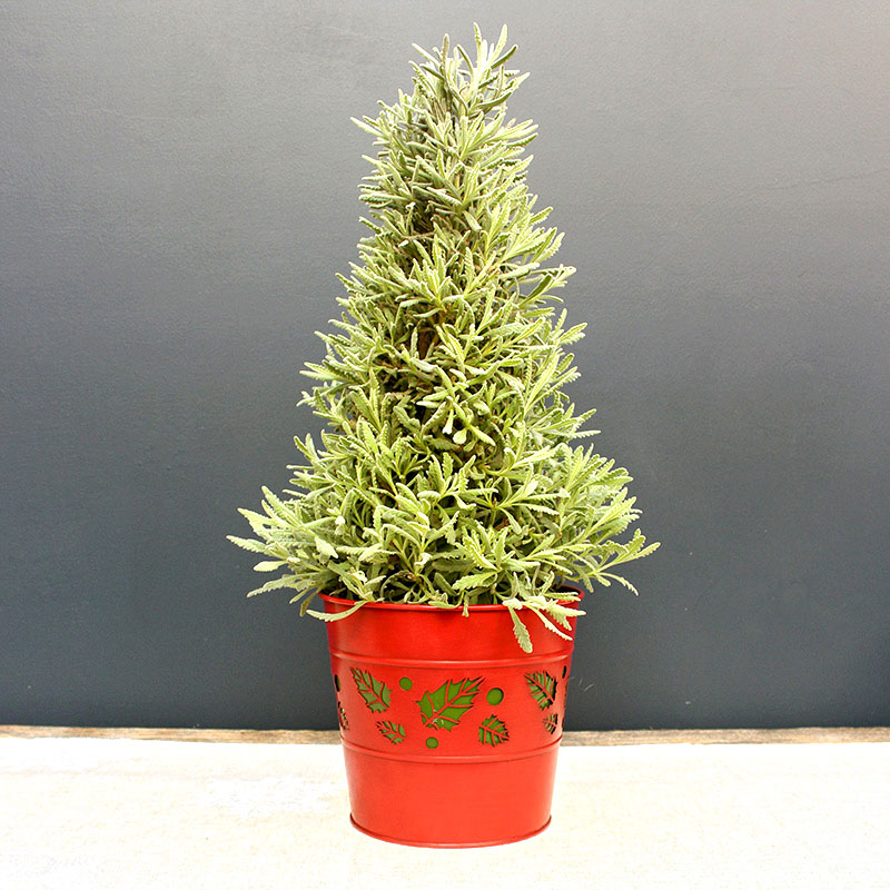 Pot Cover with Holly