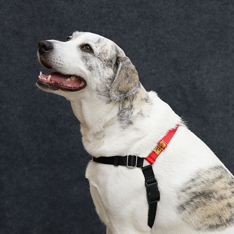 Dog Harness - XL, Red